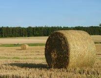 Hay Straw Bales auf dem Stoppel-Feld, dem blauen Himmel und Forest Backgr Stockbilder