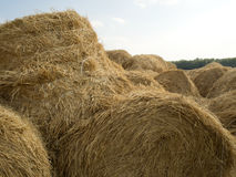 Hay and straw bales Stock Image
