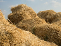 Hay and straw bales Stock Photos