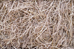 hay and straw bales Royalty Free Stock Photography