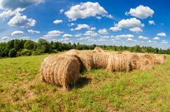 Hay and straw bales on farmland under blue sky Royalty Free Stock Image