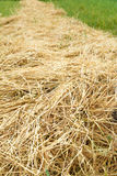 Hay straw in the field Royalty Free Stock Photos