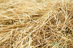 Hay straw in the field Stock Images