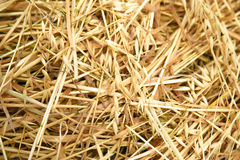 Hay straw in the field Stock Photography