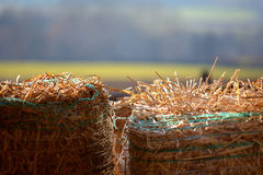 Hay and Straw Stock Photo