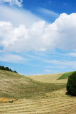 Hay and straw in lines. In the little valley stock photography