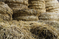 Hay and straw procured for cattle Royalty Free Stock Photos