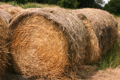 Hay Straw Rolls Arkivfoto