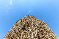 The hay straw. Stock Photo