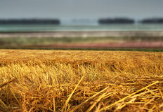 Hay straw stack on field Stock Images
