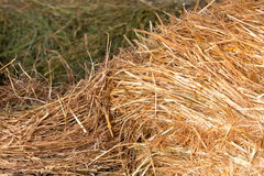 Hay and straw Royalty Free Stock Photography