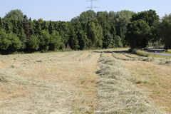 Hay. In summer in Germany Royalty Free Stock Photography