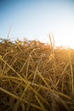 Hay in the sunset Stock Photos