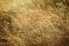 Hay  in the sunset - agricultural concept Royalty Free Stock Photos