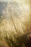 Hay  in the sunset - agricultural concept Stock Photo