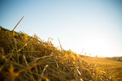 Hay in the sunset Royalty Free Stock Photos