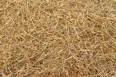 Hay texture Royalty Free Stock Images