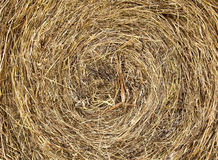 Free Hay Texture Royalty Free Stock Photos - 20771108