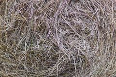 Free Hay Texture Royalty Free Stock Photography - 28413697