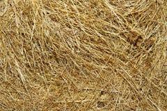 Free Hay Texture Stock Photos - 32668833