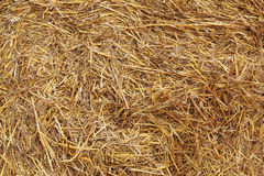 Free Hay Texture Stock Photography - 33306072