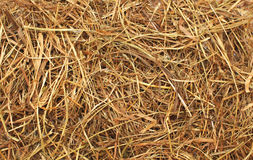 Hay texture abstract background closeup Stock Photos