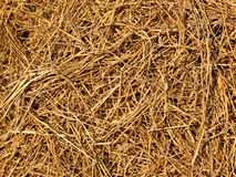 Hay texture and background Stock Photos