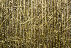 Hay texture background Stock Image