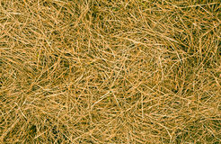 Hay Texture Background Royalty Free Stock Image