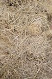 Hay texture Royalty Free Stock Photography