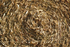 Hay Texture Royalty Free Stock Image