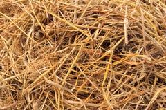 Hay. Texture hay closeup , rice straw Stock Photography