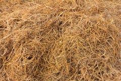 Hay. Texture hay closeup , rice straw Royalty Free Stock Photography