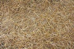 Hay texture Stock Photo