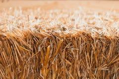 Hay texture Stock Image