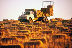 Hay Truck. Farm truck loaded with bales of Hay parked in field of Hay bales Stock Photos