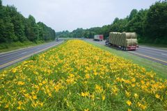 Hay truck driving on yellow flower lined state highway in rural Virginia Stock Photo