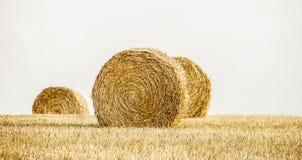 Hay. Tuscany Italy Maremma Outdoor  Travel Royalty Free Stock Photo
