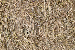 Hay Royalty Free Stock Photo