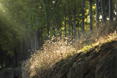 Hay under backlighting stock photography
