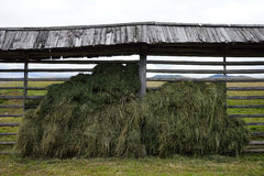 Hay under roof Royalty Free Stock Photography