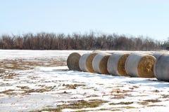 Hay under snow Stock Image