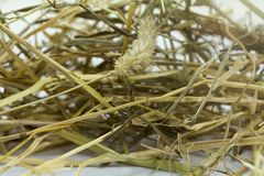 Hay used as rabbit food and bedding stock images