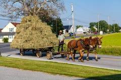 Hay Wagon puxado a cavalo com rodas do metal Imagem de Stock