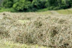 Hay windrow close up Royalty Free Stock Image