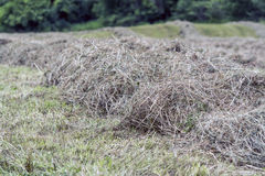 Hay windrow Royalty Free Stock Images