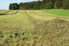 Hay windrows in the field Stock Photos