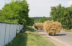 Hay workers going home. Countryside hay workers going home with hay bales Stock Photos