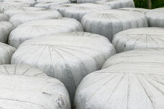 Hay wrapped in white bales Stock Photo