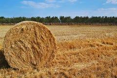 Hay on yellow summer field Stock Photo